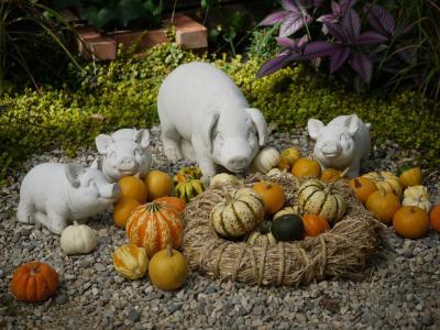 豚とかぼちゃ
