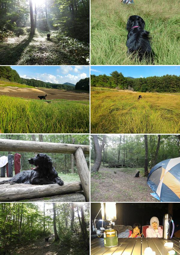 2015お盆休みキャンプ
