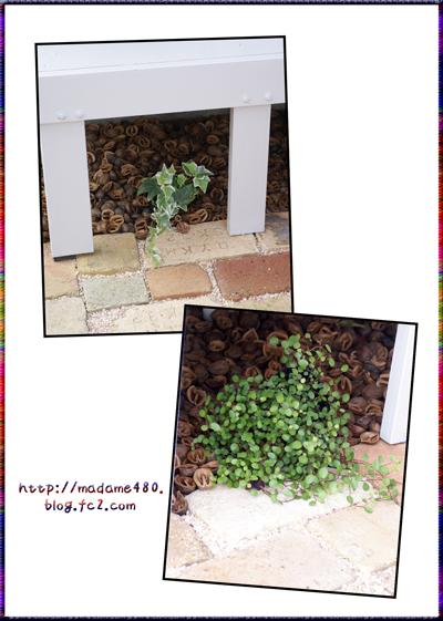 ベンチ下クルミ&植物web用