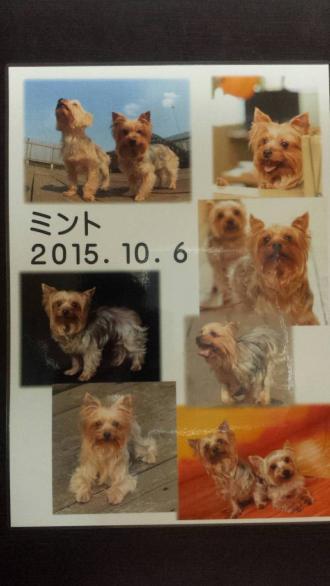 IMG_2299_convert_20151018122128.jpg