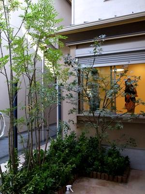 Ino中庭植栽1509