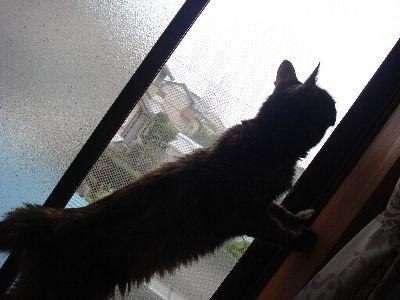 窓に上がるまきちゃん2