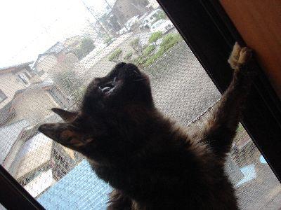 窓に上がるまきちゃん3