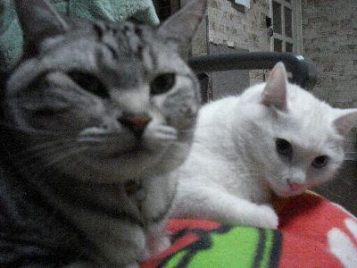 コテツさんとカリーナちゃん