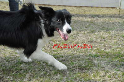 20150321aru_7.jpg