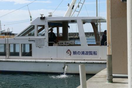 鯛の浦 遊覧船