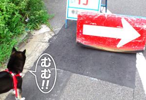 150831_yaji.jpg