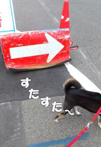 150831_yajii2.jpg