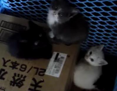20151009四日市保健所_koneko