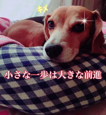 IMG_0314_convert_20150912153204.jpg