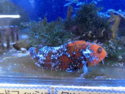 海水魚 783