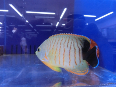 海水魚 784