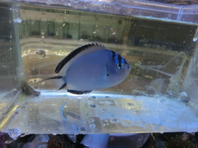 海水魚 791