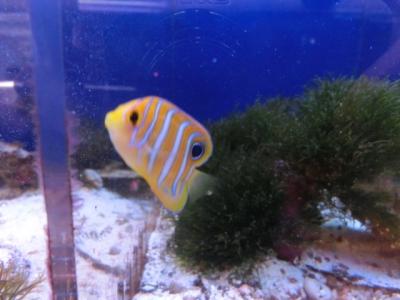 海水魚 797