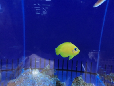 海水魚 793