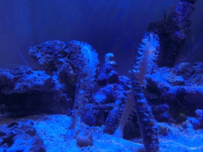 海水魚 794