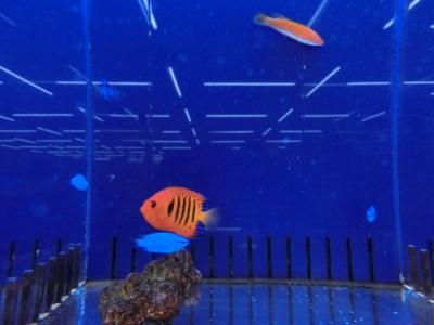 海水魚 795