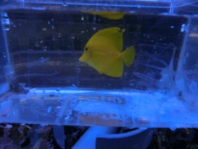 海水魚 796