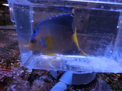 海水魚 798