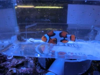 海水魚 802