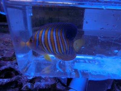 海水魚 803