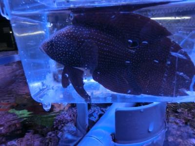 海水魚 808