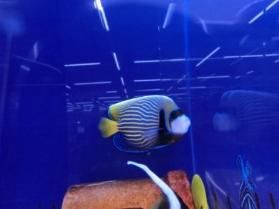 海水魚 807