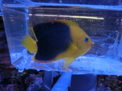 海水魚 818