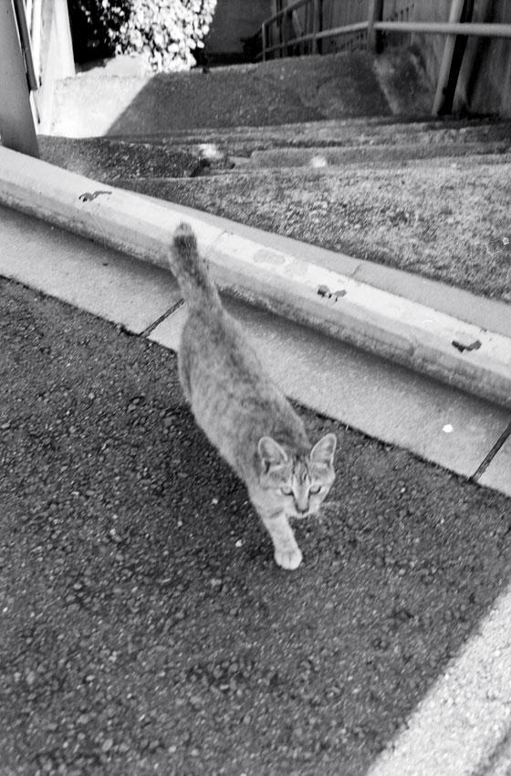坂道の街の野良猫