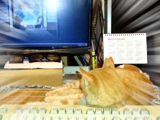150902_3433PCでアニメを眺めるトラ美ちゃんVGAzoom