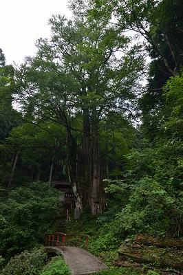 大桂と奥の院