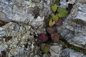 山頂の植物