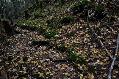 落ち葉の登山道