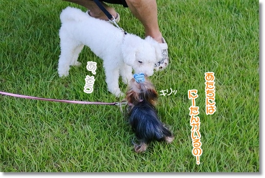 IMG_5530a (1)