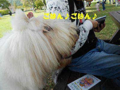 DSCN1582_201510131407482f1.jpg