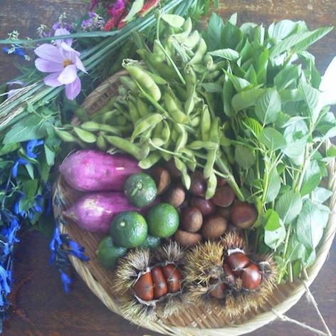 24-15 白露の野菜
