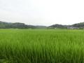 H270821 勝央町小矢田