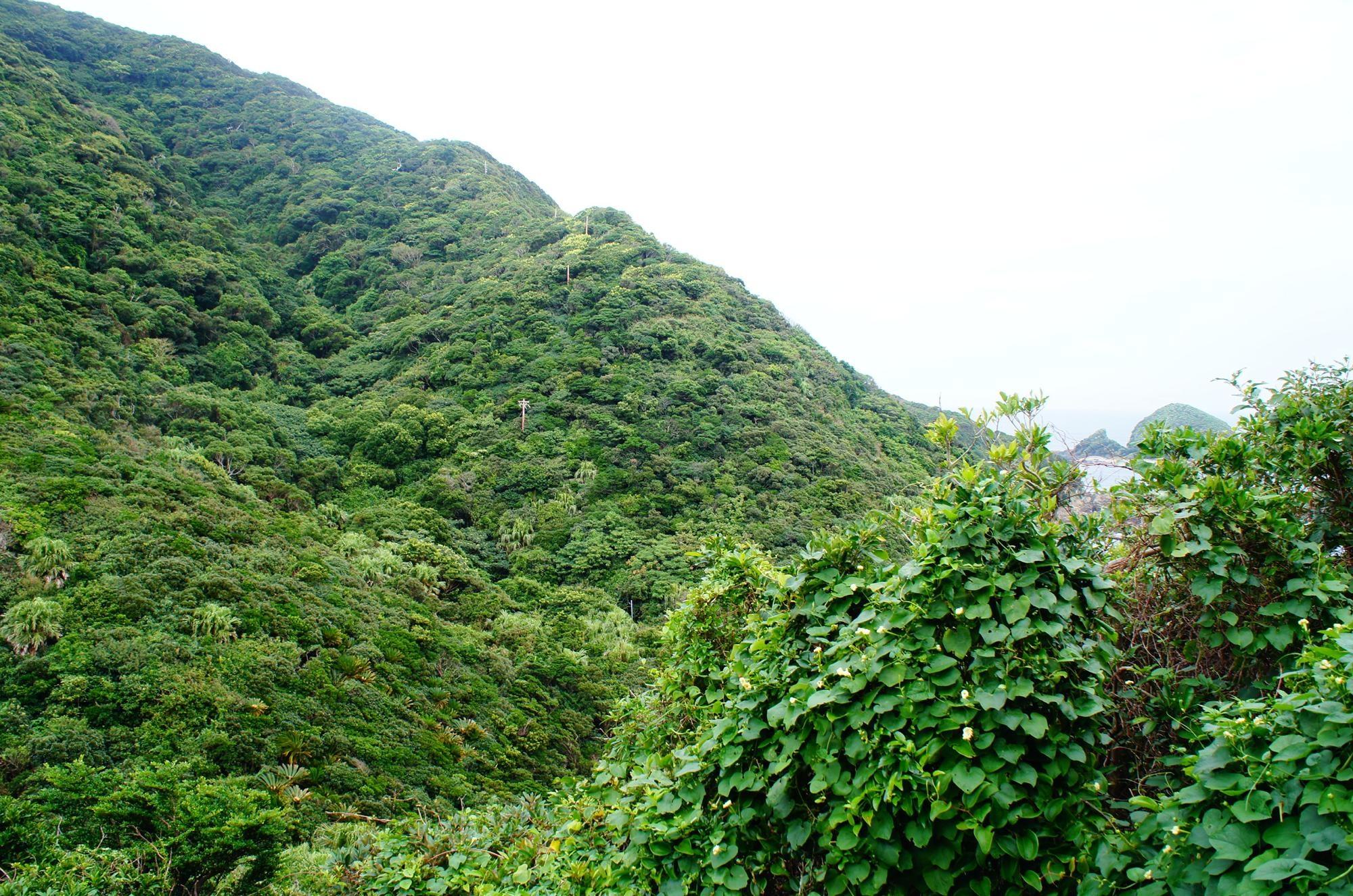 kagoshima_voyage_2015_DSC01253.jpg