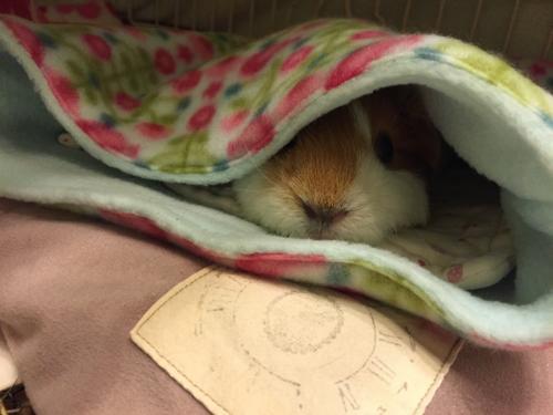 寝袋気持ちいいね