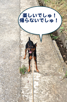20150903-5.png