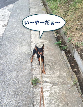 20150903-6.png