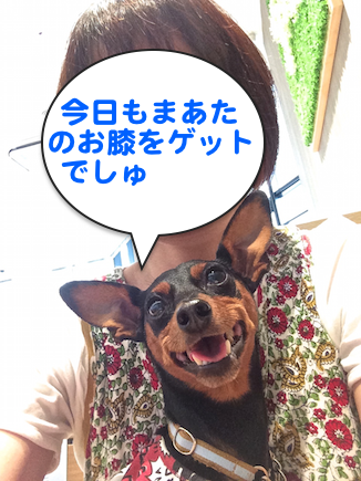 20150922-2.png