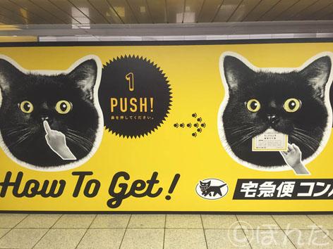 黒猫イベント_1