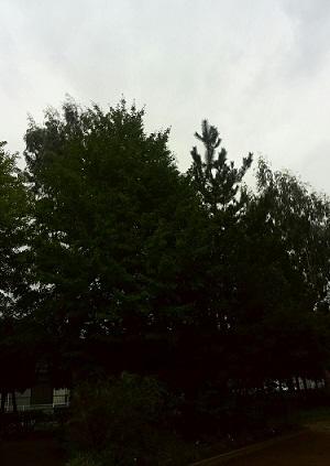 みらい住建 リフォーム 松戸市の市の木 2号3日縮小