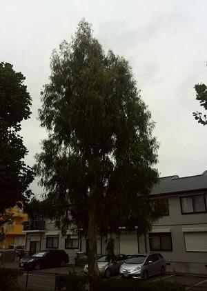 みらい住建 リフォーム 松戸市の市の木 2号3日②縮小