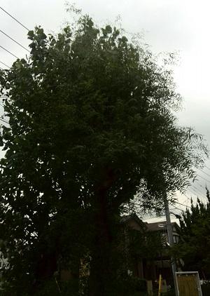 みらい住建 リフォーム 松戸市の市の木 2号3日③縮小