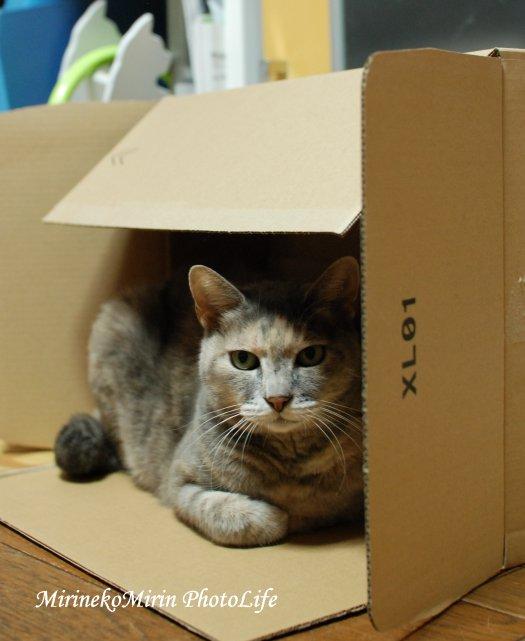 20151011チビ箱猫