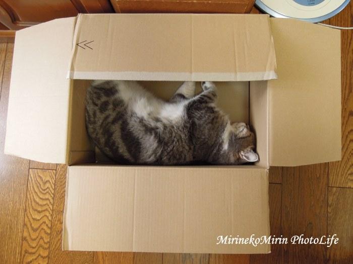 20150907箱猫