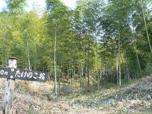 0904竹林