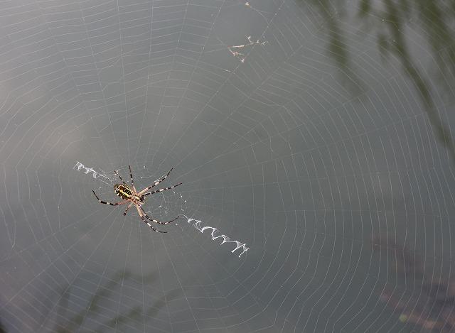 土手の蜘蛛の巣 27.8.29